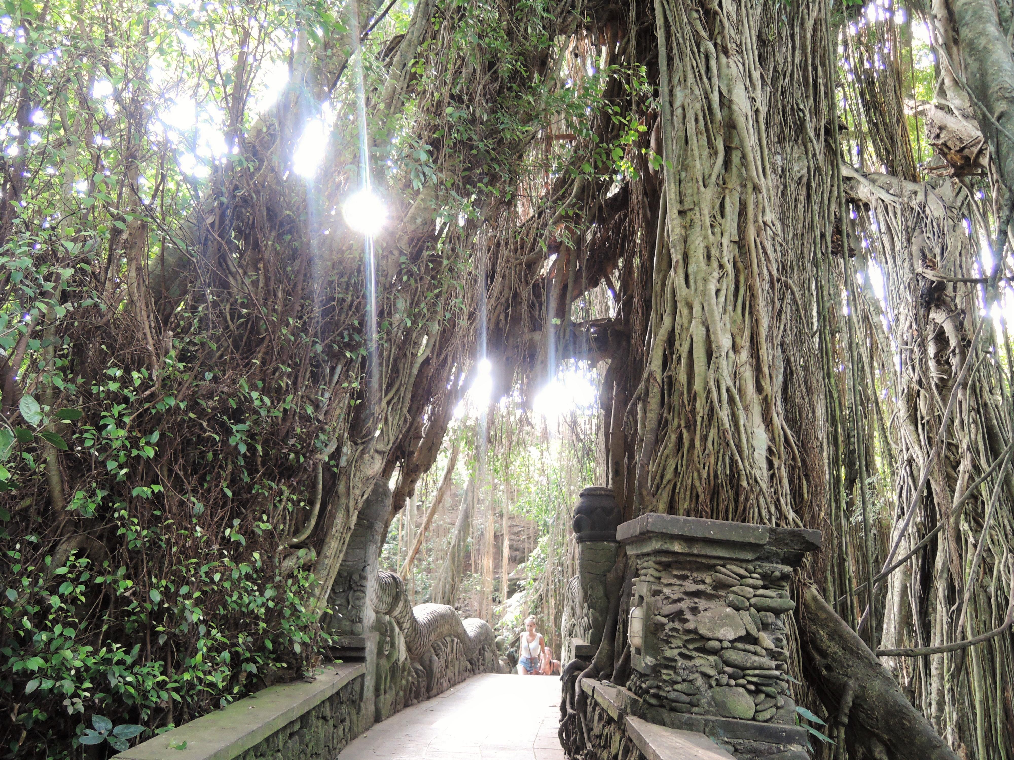 Ponte na floresta dos macacos em Ubud